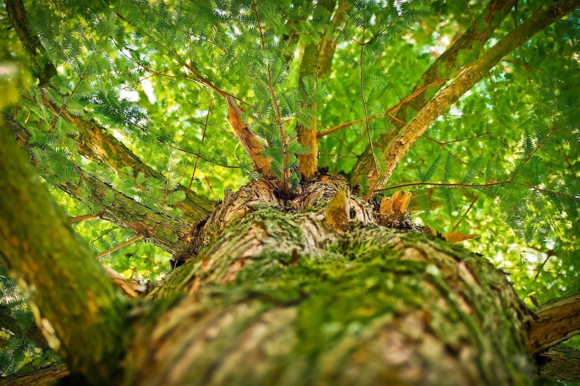 Combinando las ramas